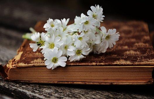 book-2363912__340.jpg